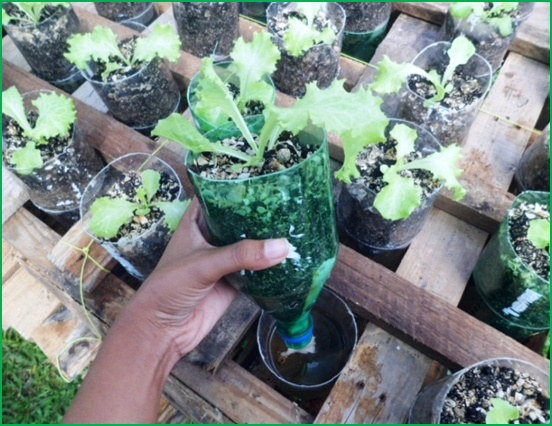 Sadhana S Journey Sub Irrigation Planter In 1 5 L Pet
