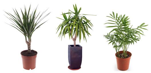 horta em apartamento plantas de interiores
