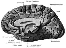 operacion cerebral