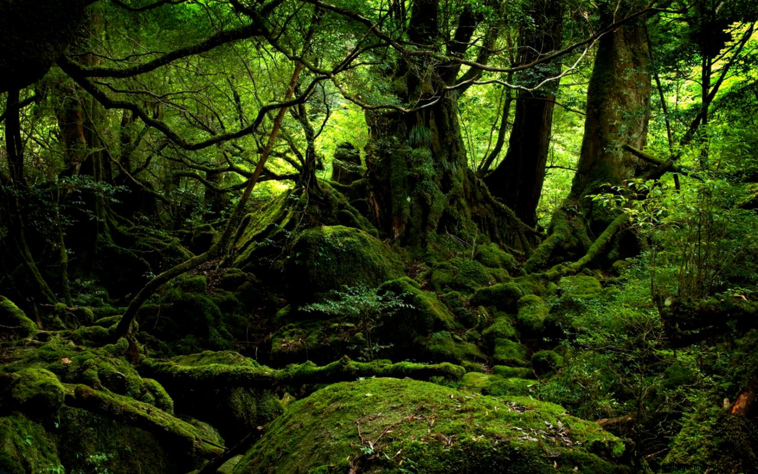 Forest Nature HD Desktop Wallpaper   Nature Wallpaper HD