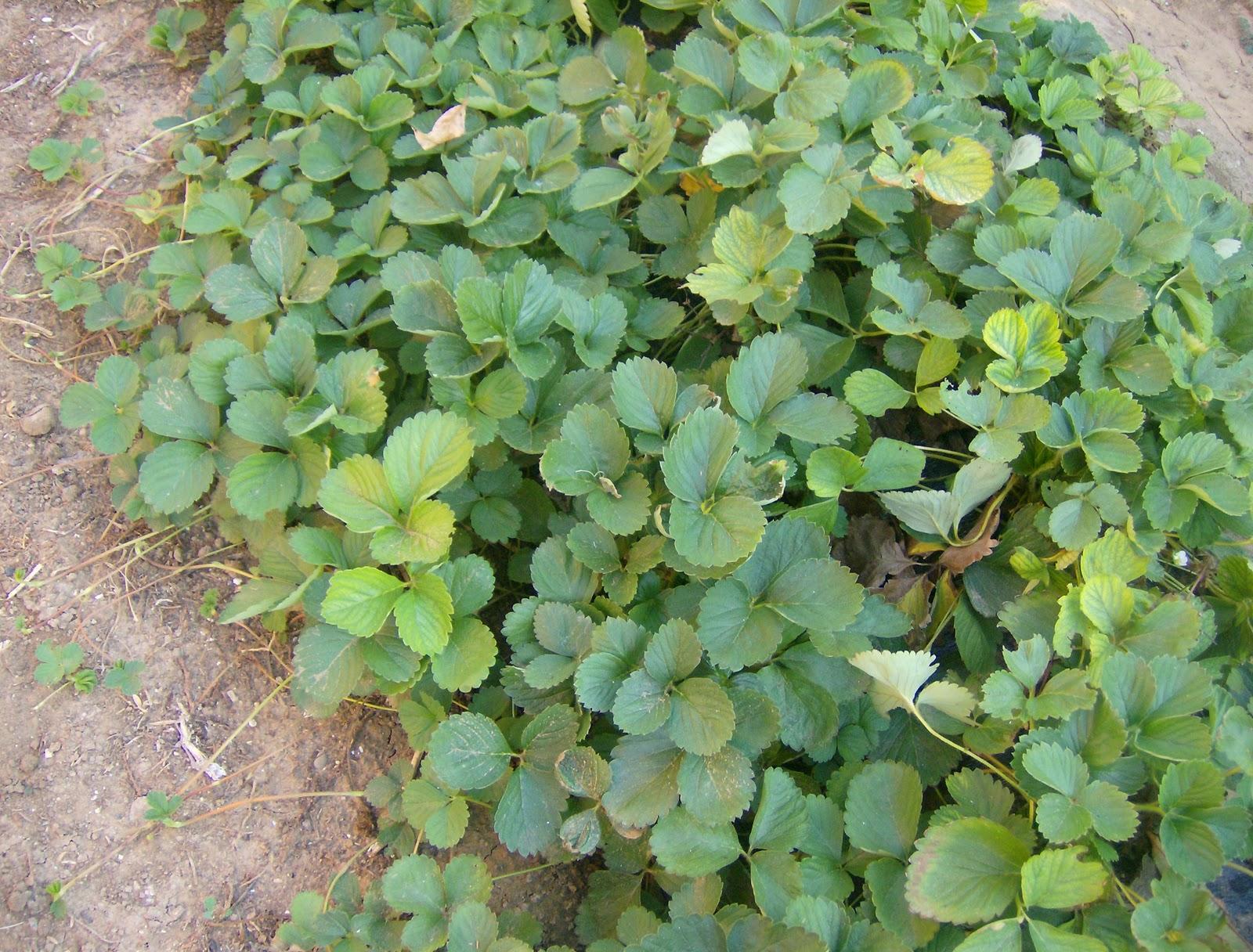 El huerto del lopez septiembre 2011 for Que se planta en septiembre