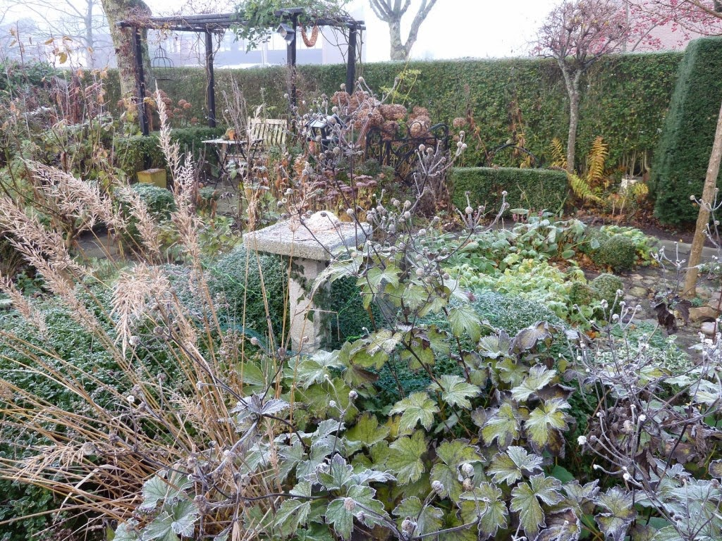 In m jn tuin tuinfoto 39 s december - Bijzonder tuinfoto ...