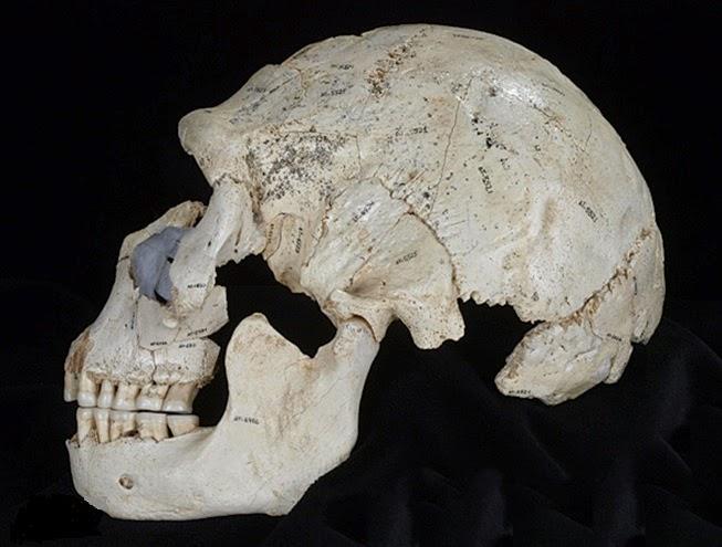 Neandertal e hominídeo