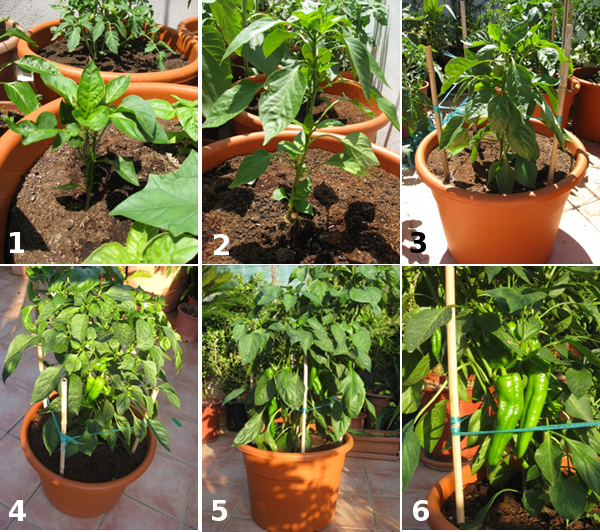 C mo hacer un cultivo ecol gico casero en macetas for Concepto de plantas ornamentales