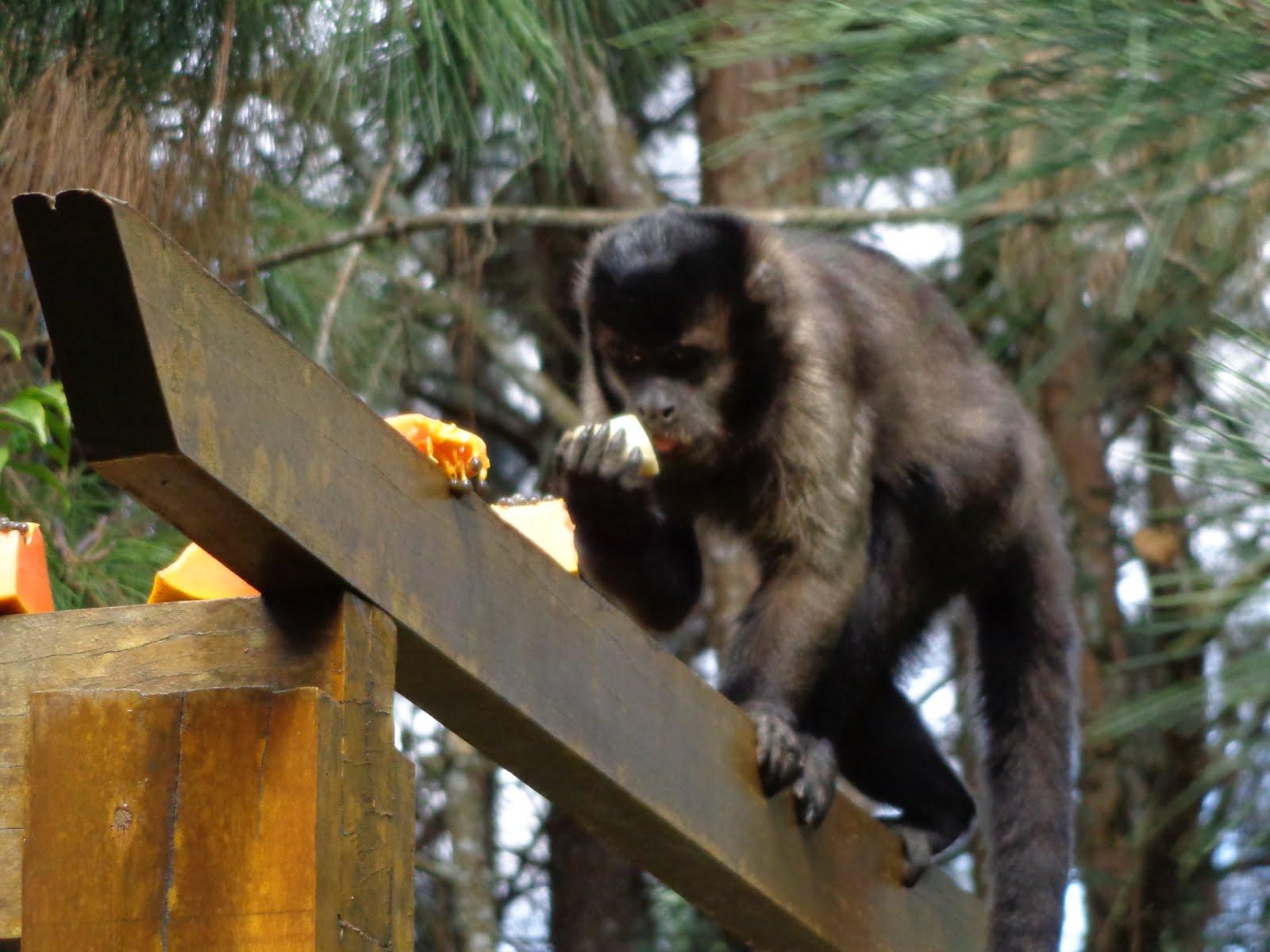 Trabalhamos pela proteção e bem-estar dos moradores da floresta!
