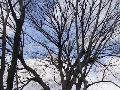 枚方市・意賀美神社(おかみじんじゃ)の樹