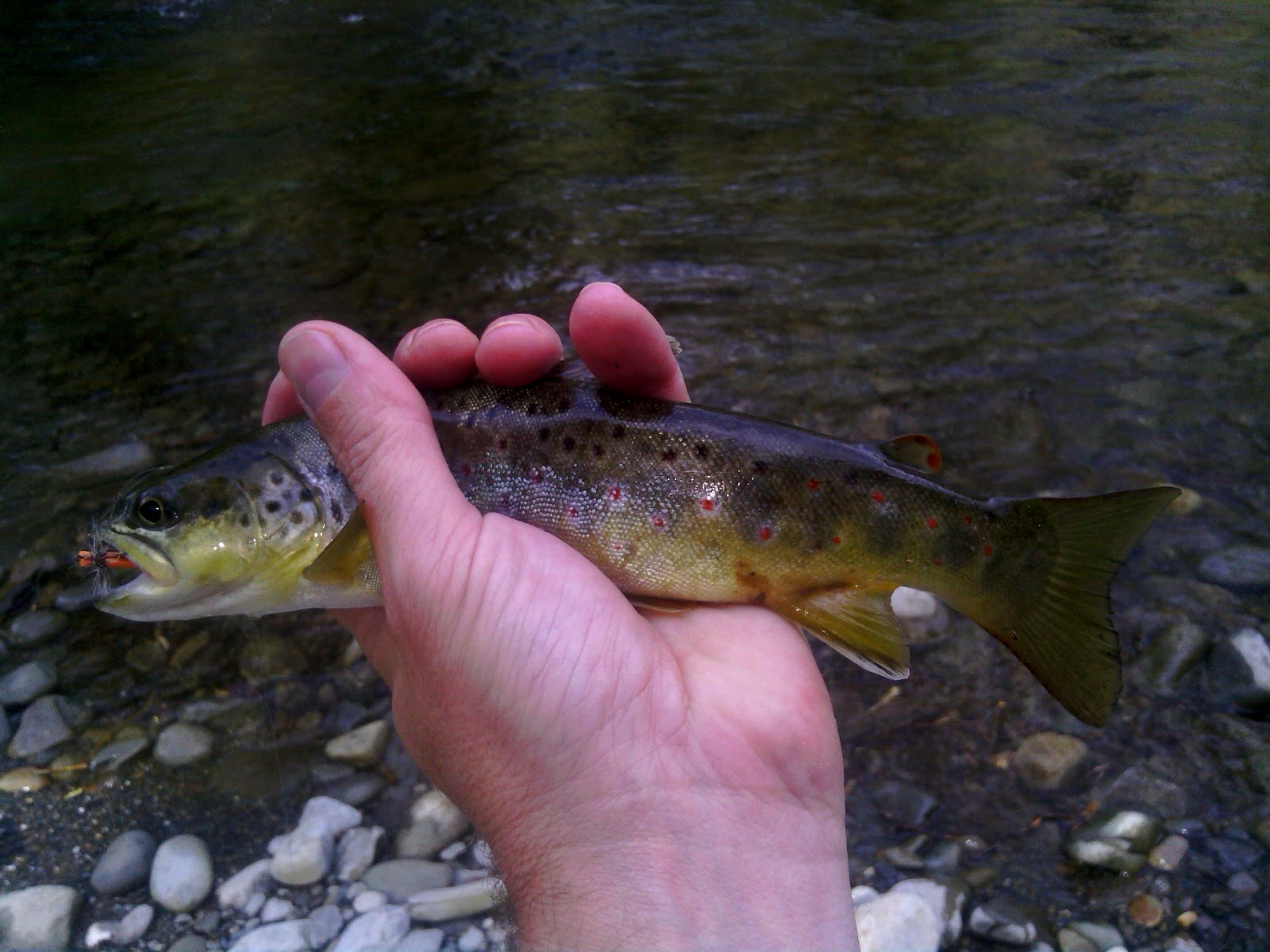 Tennessee fly fishing smoky mountain spring saftey tips 2013 for Smoky mountain trout fishing