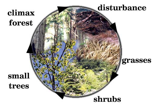 Ecological Succession - Lessons - Tes Teach
