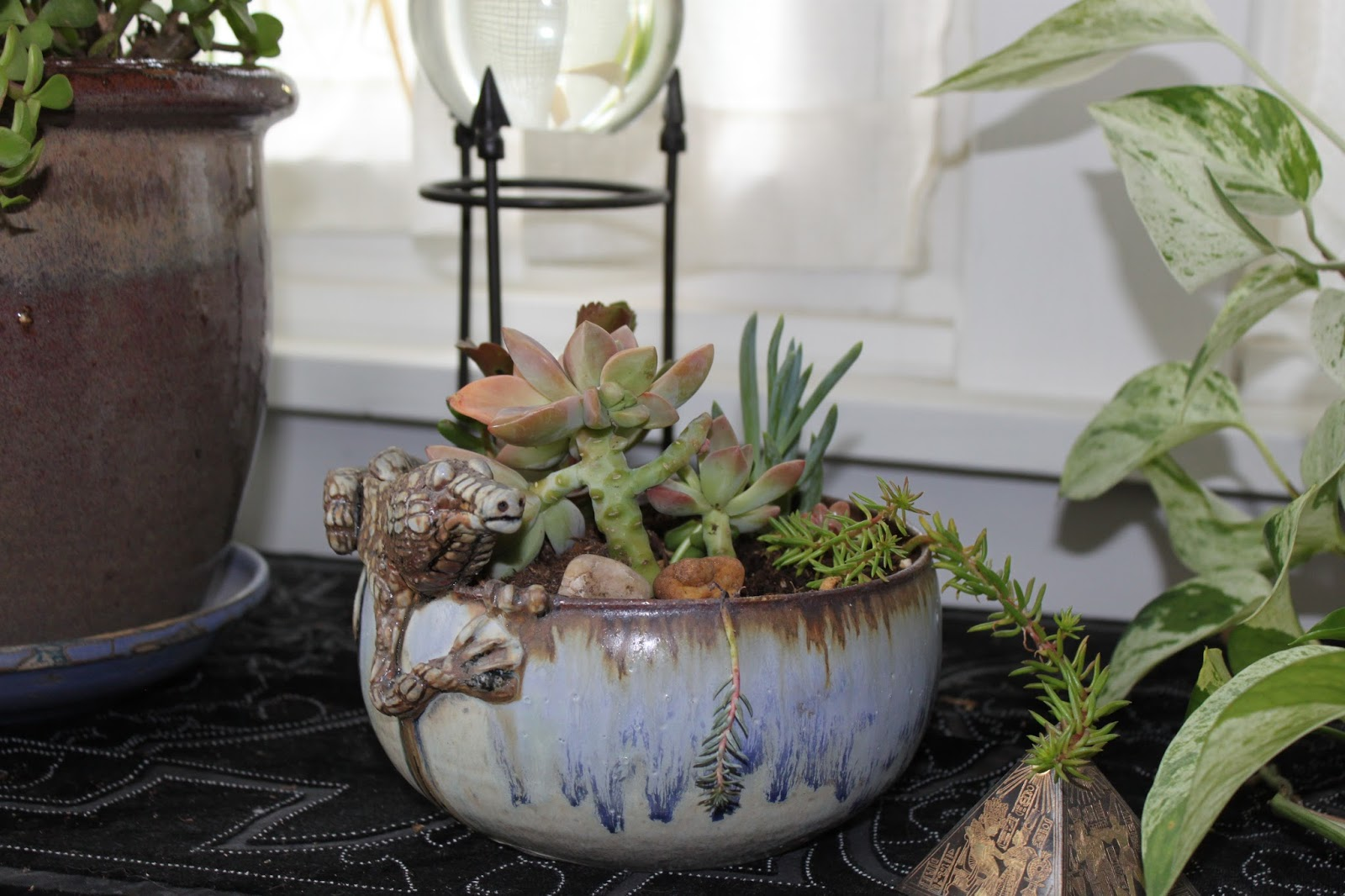 Better dogs and gardens succulents - Seven tricks for healthier potted plants ...