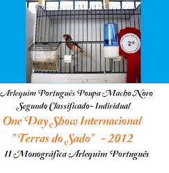 Arlequim Português Poupa Macho