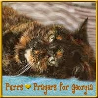PURRS FOR GEORGIA