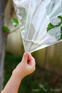 Simple science for kids - how does a leaf get water?