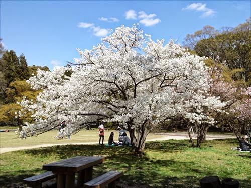 京都市左京区|京都府立植物園