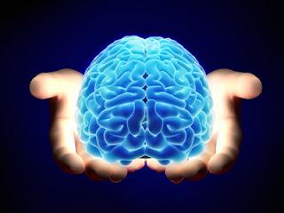 cerebro y  neurociencia