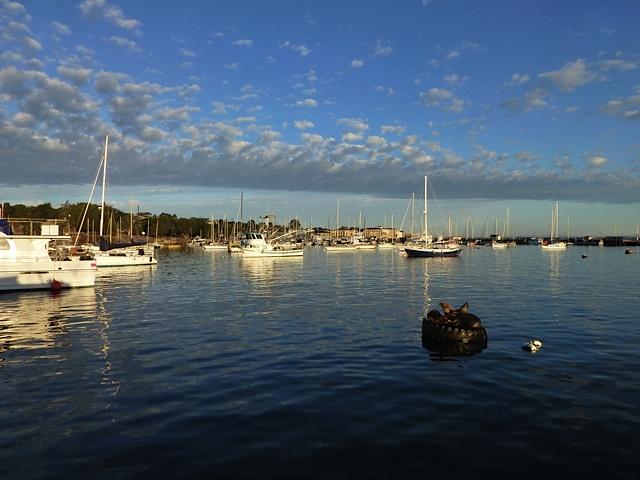 Debi shearwater 39 s journeys trip report october 6 for Half moon bay pier fishing