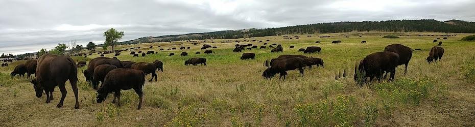 Custer State Park in South Dakota