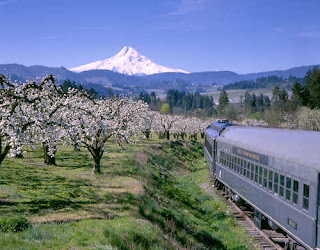 View of blossoms and Mount Hood from a train