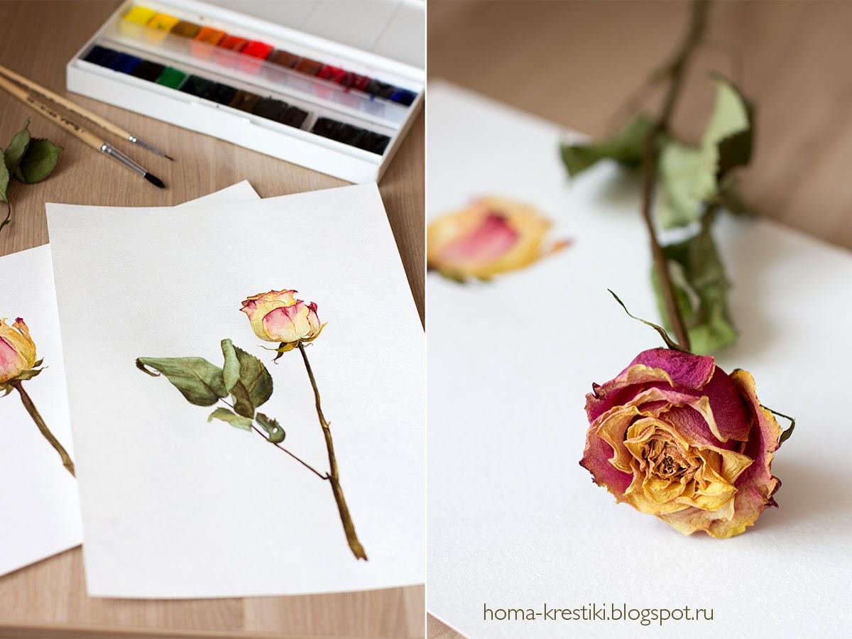 акварель, роза, роза акварелью, watercolor
