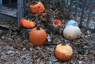 pumpkins chewed by whitetail deer