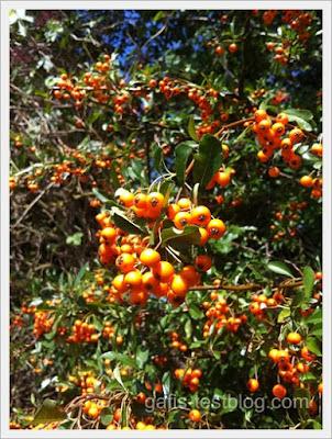 Orangefarbene Beeren