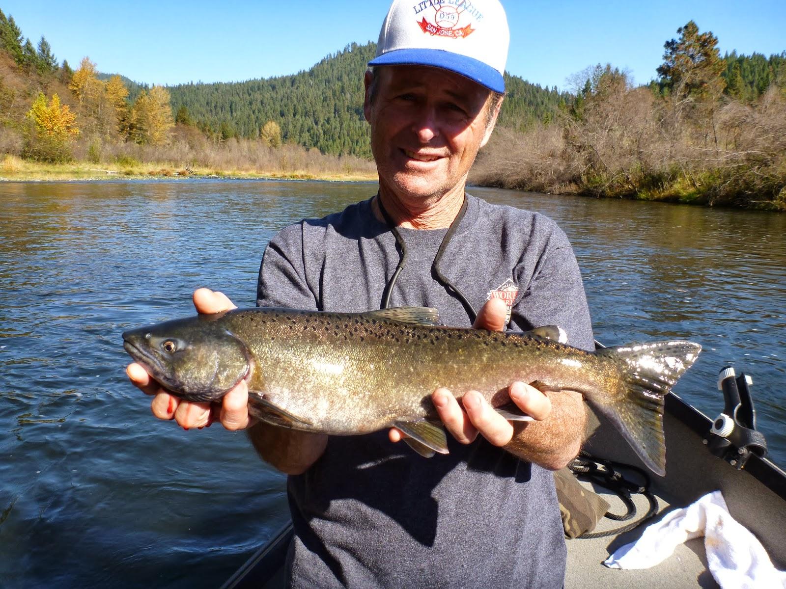 Ironhead guide service 530 598 0530 premier klamath river for Steelhead fishing california