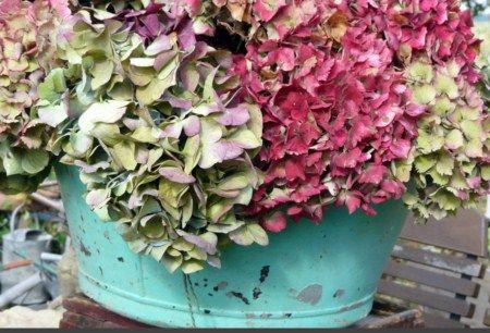 les armoires d 39 hortensia les tenues hiver 2011 sont sur. Black Bedroom Furniture Sets. Home Design Ideas