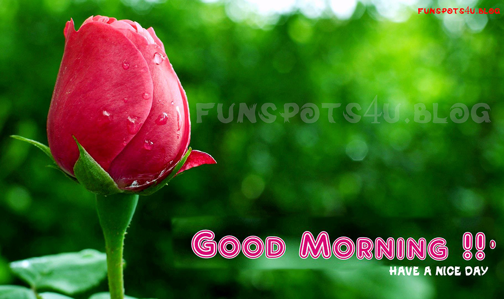Funspots For You Good Morning Quotes With Wishes Wallpapers