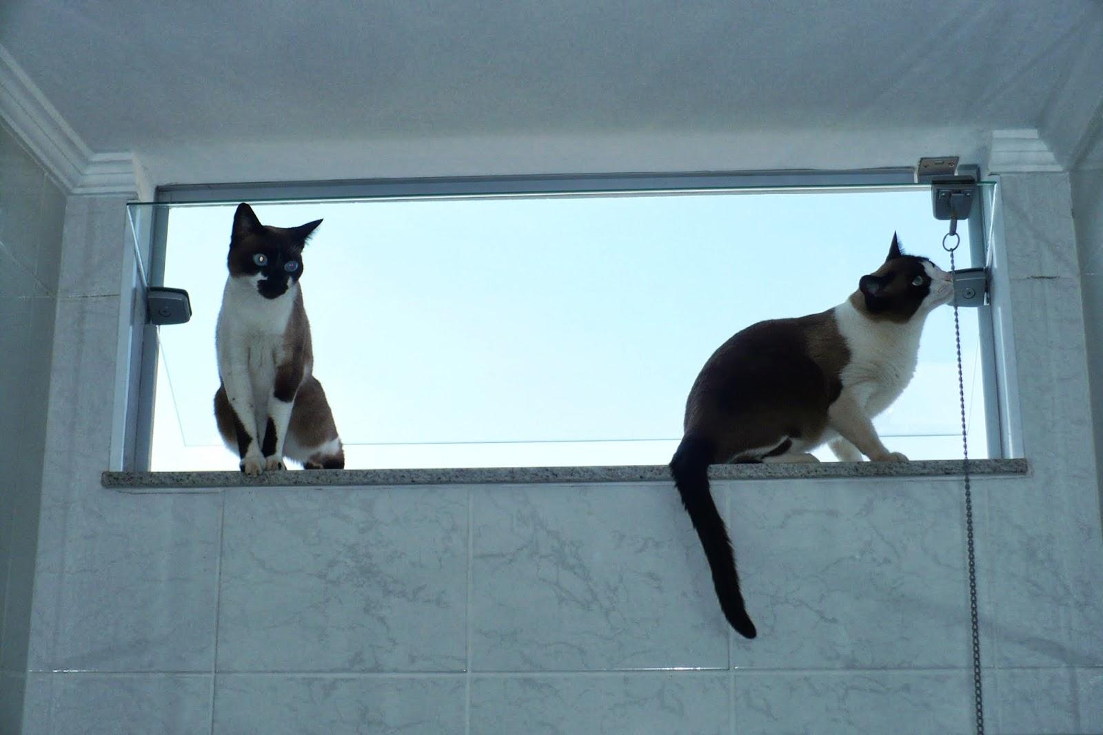 Frida: Puxa como é alto aqui !!!! Tem uma bela vista lá de fora !!!! #09A9C2 1600 1067