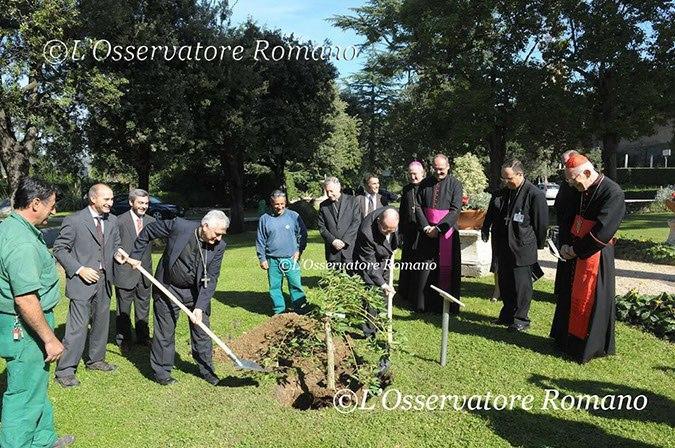 Sinodo de obispos obispos argentinos plantaron un ceibo for Jardines vaticanos