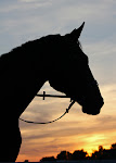 "My Blog ""Just Horses"""