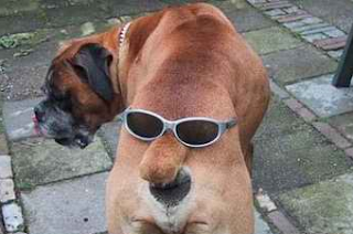 funny dog picture with glasses on his back