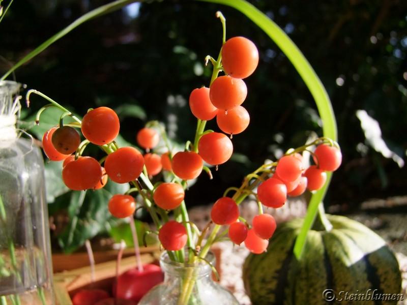 Maiglöckchen Beeren