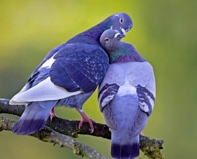 Love And Romance Wallpapers For Your Mobile Phones Cell Smart Sweetest Bird Laptops Notebooks