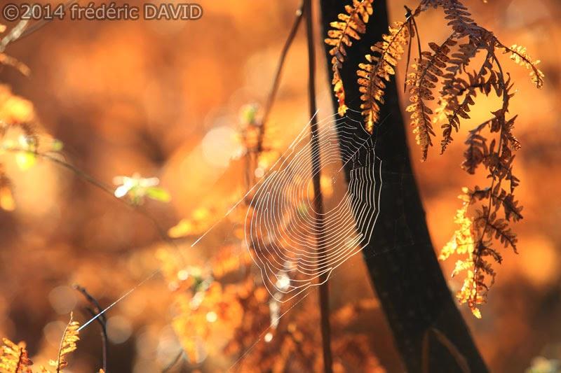macro toile araignée fougères forêt Fontainebleau