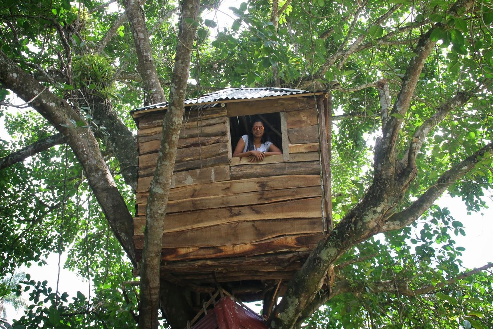 Atacando pastor construye casa arriba de un rbol de for Como se disena una casa
