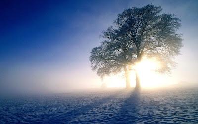 Foto Pohon dengan Kabut Keren