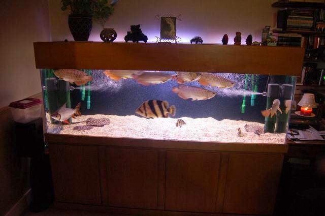 hồ cá rồng