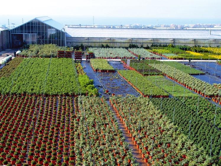 Thm tecnolog as de la horticultura mediterr nea los for Viveros ornamentales