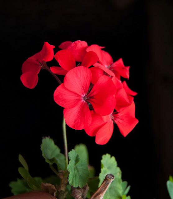 flores carmona cantabria vida