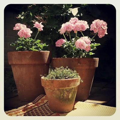 ByHaafner, pink, flowers, container garden