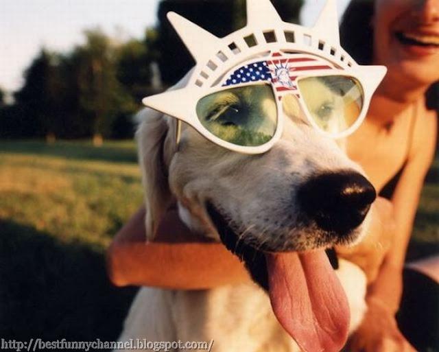 Funny dog in glasses.