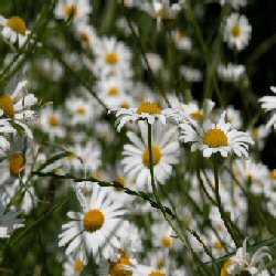 English Plants Drought Tolerant Plants