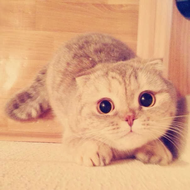 Funny cats - part 85 (40 pics + 10 gifs), cat with big eyes