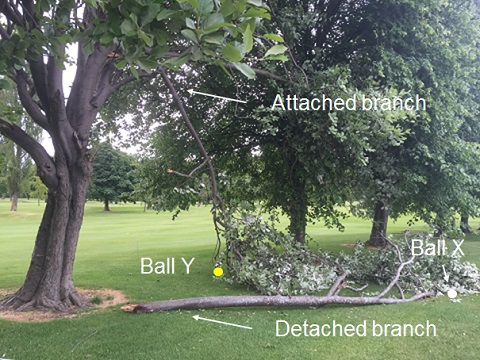 Rules of Golf: Fallen Tree Branches