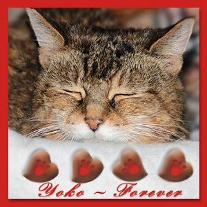http://wildcatwoodscats.blogspot.com/2013/12/sweet-dreams-yoko.html