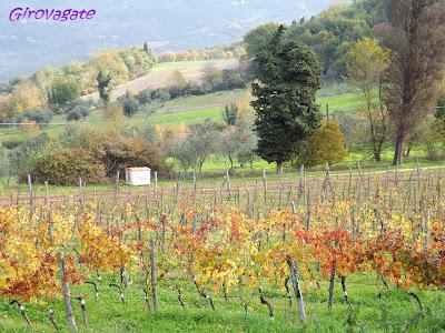 Fattoria Lavacchio vigneti Chianti Toscana