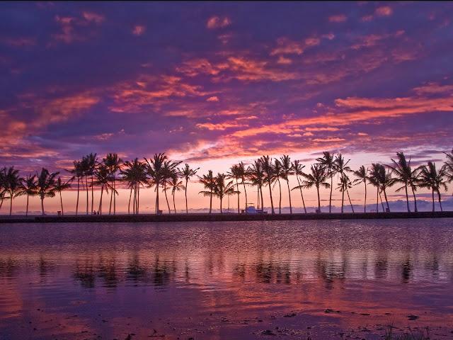 طبيعية لأجمل الجزر 2016 اشجار 86.jpg
