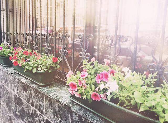 цветы рядом с Кофеманией