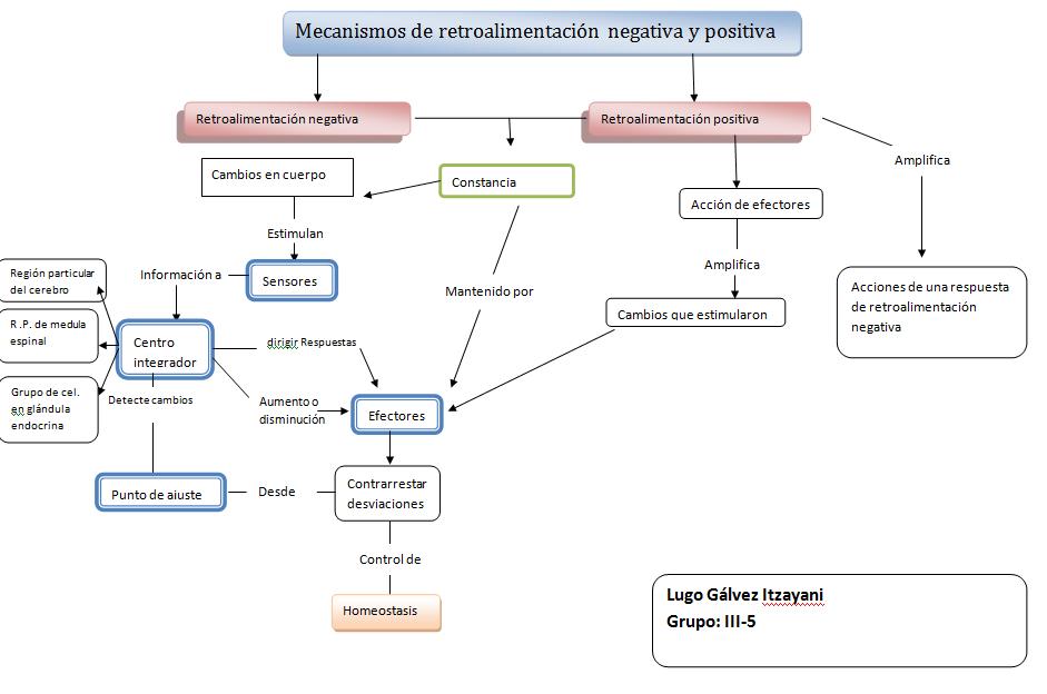 itzayani-fisiologiabasica: RETROALIMENTACIÓN NEGATIVA Y POSITIVA ...