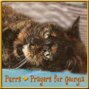 Purring for Georgia